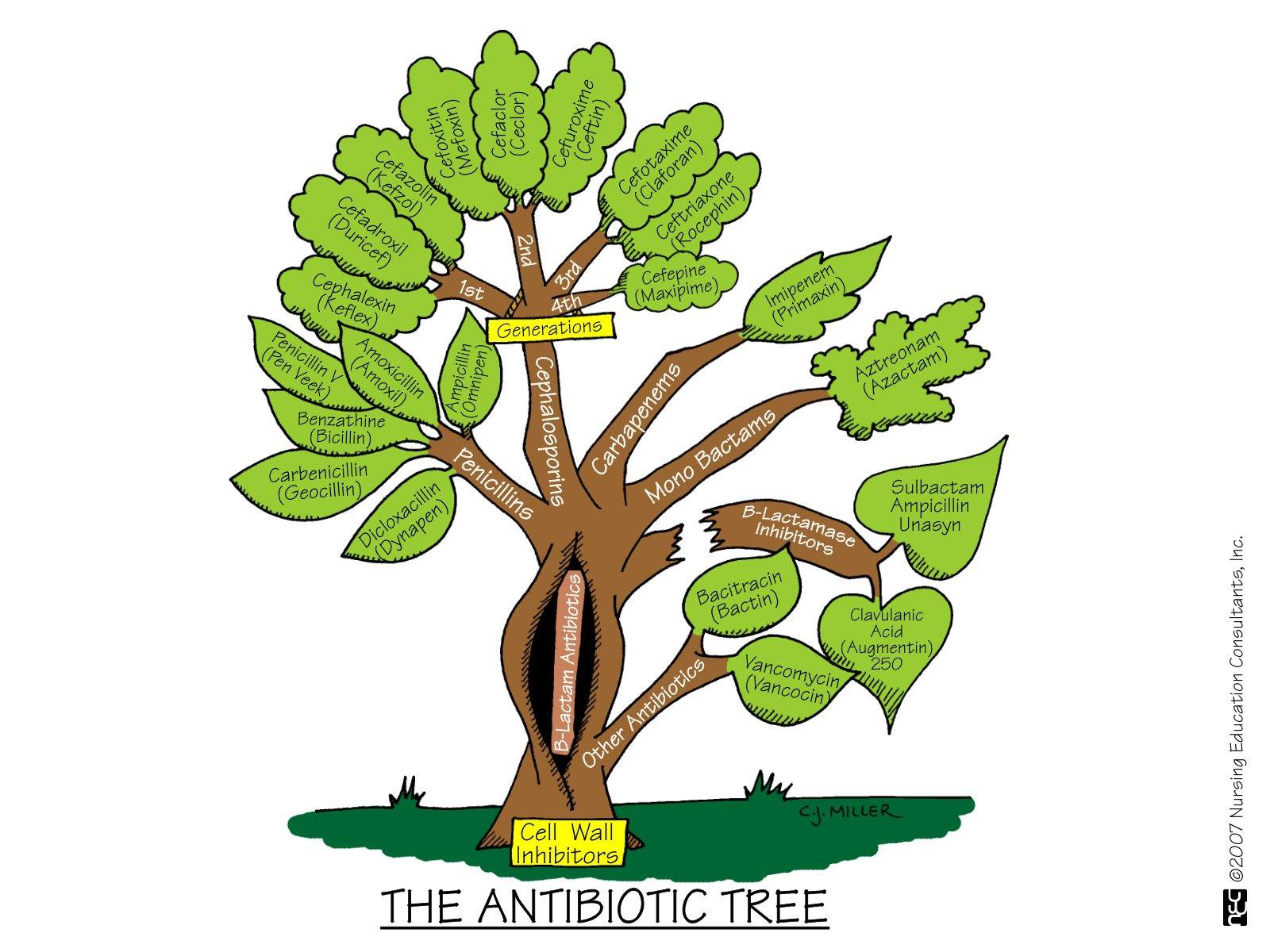 Antibiotic Tree