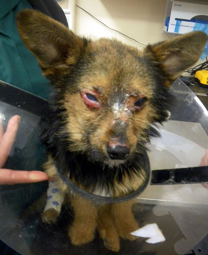 The youngsters broke the doggie's legs and neck and set his face and eyes on fire