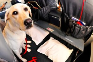 Alaska Airlines Announces Ban on Emotional Support Animals
